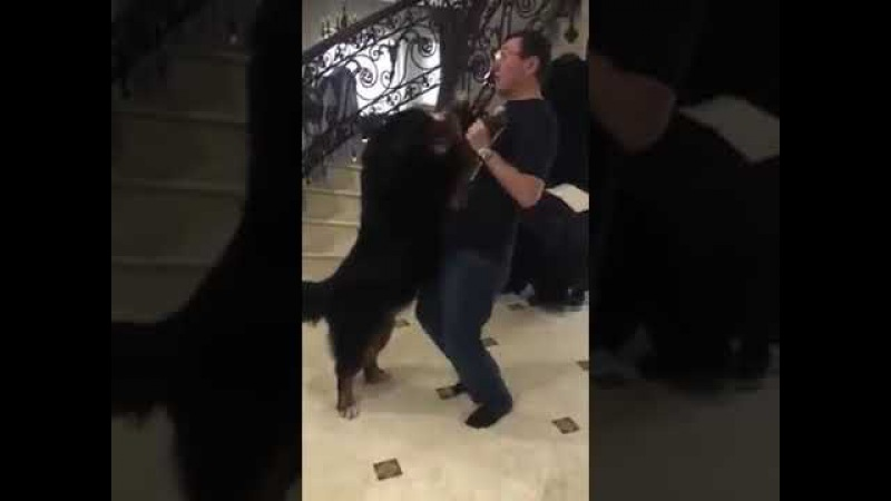 Человек похожий на Генерального прокурора Украины и его загадочный танец