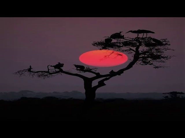 Steffen Kirchhoff (feat. Arutani) – Pachamama