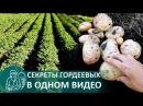 🍅 Выращивание картофеля по технологии Гордеевых