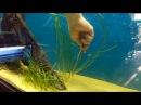 Запуск аквариума на 500 литров часть 2