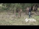 Homem vs Canguru Homem dá soco no animal que feria um cachorro