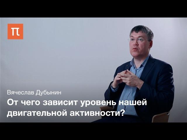 Средний мозг — Вячеслав Дубынин chtlybb̆ vjpu — dzxtckfd le,syby