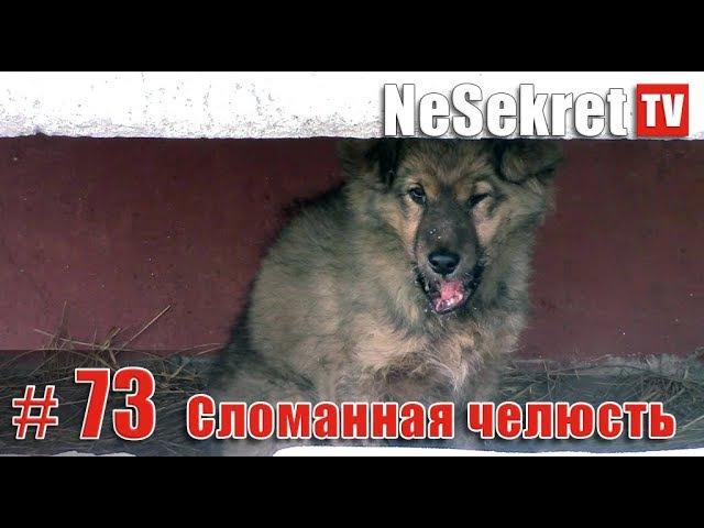 Собака со сломанной челюстью. Спасение 73. Город Улан-Удэ.