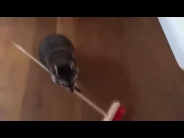 Злой уборщик coub