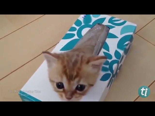 Algumas provas de que gatos são líquidos!