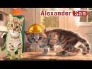 ПРИКЛЮЧЕНИЕ МАЛЕНЬКОГО КОТЕНКА мультфильм про котят мультик для детей про кота ...