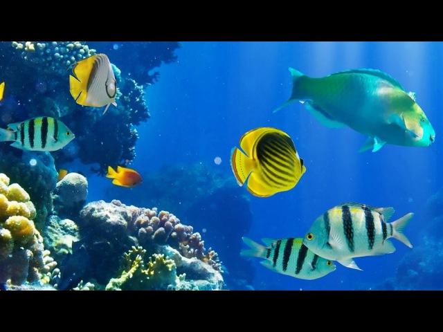 2 Hours of Beautiful Coral Reef Fish, Relaxing Ocean Fish, Stunning Aquarium Relax Music 1080p HD