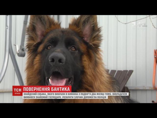 Господар знайшов свого собаку, якого викрали у новорічну ніч з подвіря
