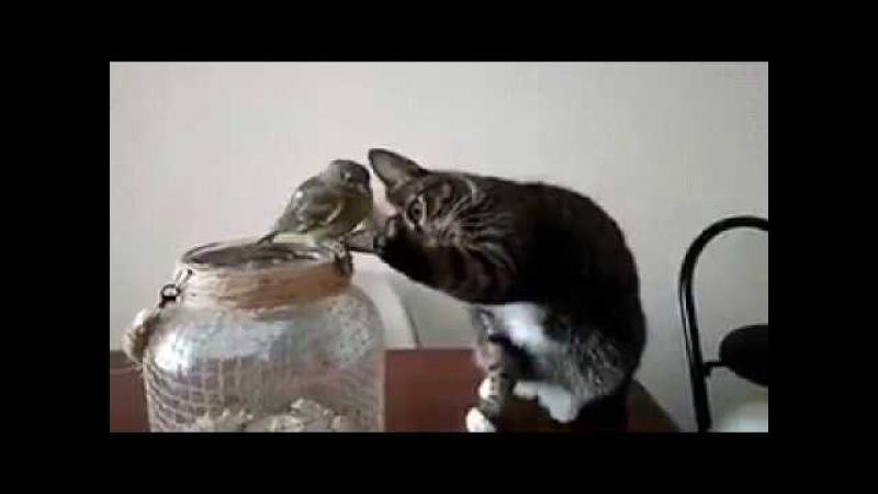 Котик гладит птичку (bird and cat)