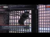 В ижевском зоопарке появился манул Алтай