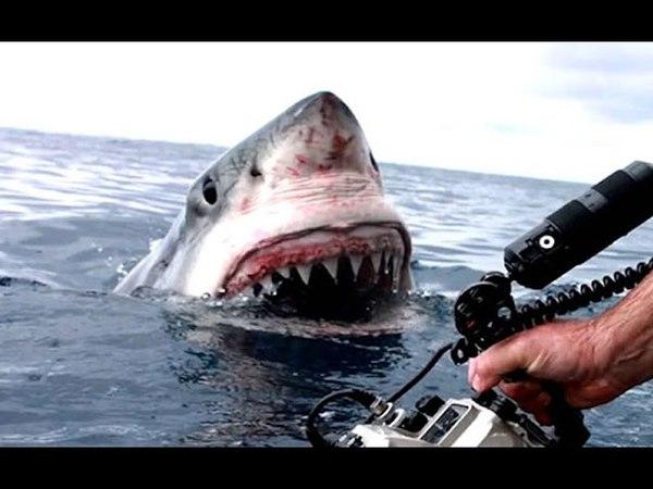 Нападения Акул Снятых На GoPro