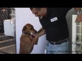 «Бриллианты, яхты и авто? Нет уж, я лучше собакам помогу!» Богач спас 735 питомцев и это лишь начало!
