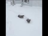 Популярное на YouTube.Когда снега много не бывает