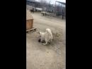 На Фонде обнаружилась собака-копака 😊 кому вырыть яму НЕ ДОРОГО 😊?