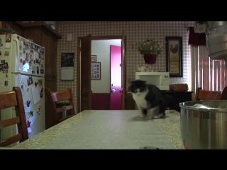 Кошка на столе. Scat Mat 02