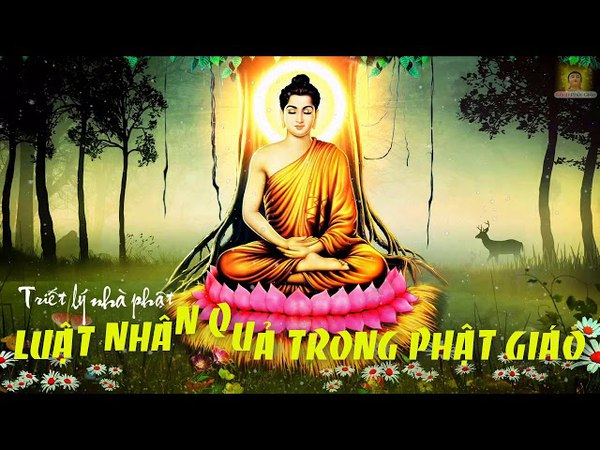 Luật Nhân Quả Trong Phật Giáo | Triết lý nhà phật