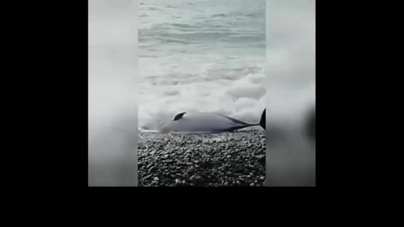 17.0.2018 В районе Олимпийского парка был найден очередной мертвый дельфин
