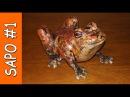 Sapo enorme feito com saco de lixo e papel - frog sculpture paper plastic