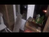 Кот говорит, открой мне.