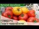 Как я сею помидоры в торфотаблетки