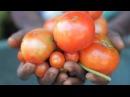 Корпоративное видео ФАО