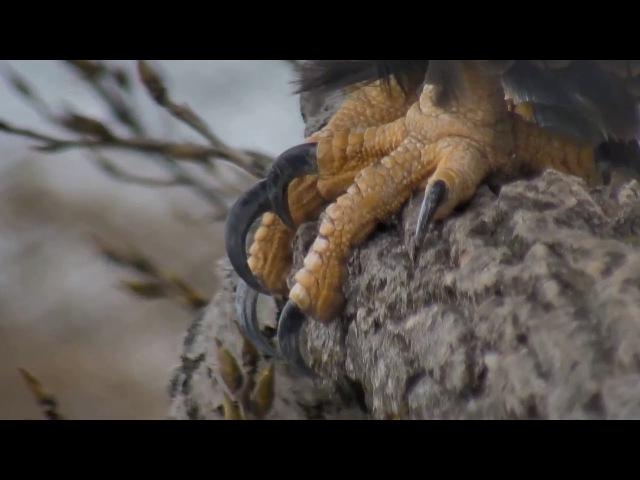 Jan 26 Talon study, mom closeups
