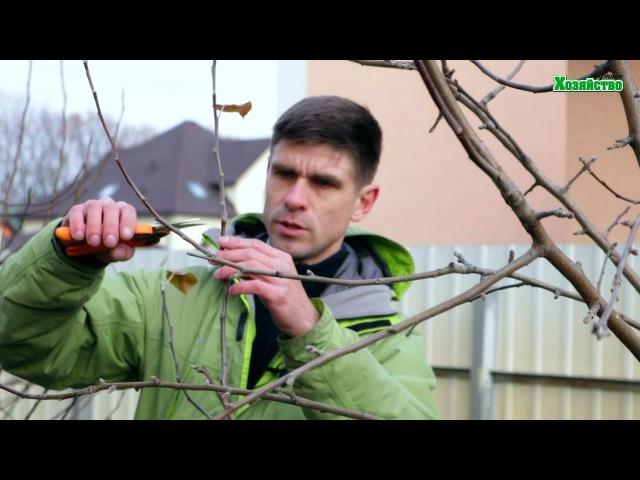 Как правильно обрезать яблоню осенью Формировка кроны яблони для сада