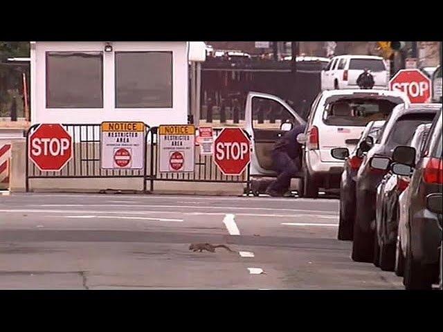 Белый дом оцеплен из-за врезавшейся в ограждение машины