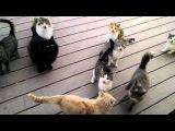 стая голодных кошек