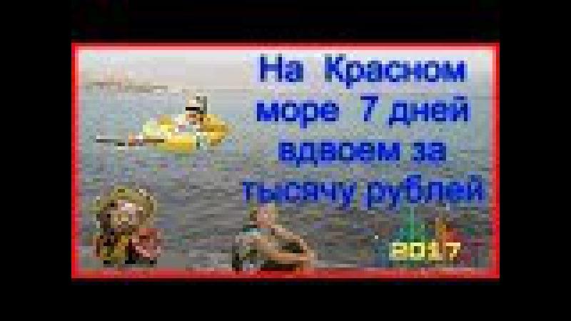 На Красном море жаркая осень.redex,bitcoin,satoshki