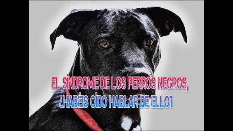 El síndrome de los perros negros