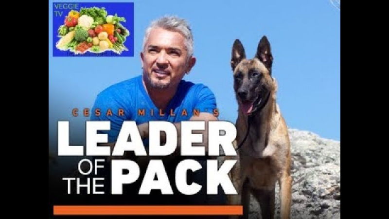 Cesar Millan Leader of the Pack with 2 girls