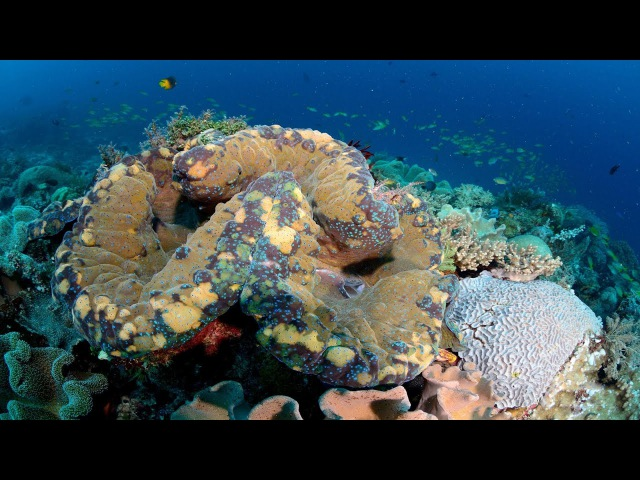 The fascinating secret lives of giant clams | Mei Lin Neo