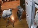 Холодильник! Ты могуч, ты хранишь сосисок туч!
