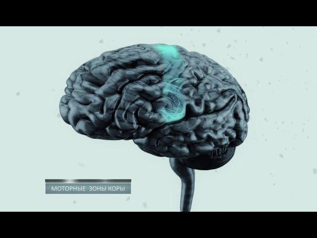 Тайны мозга. Фильм 2 nfqys vjpuf. abkmv 2