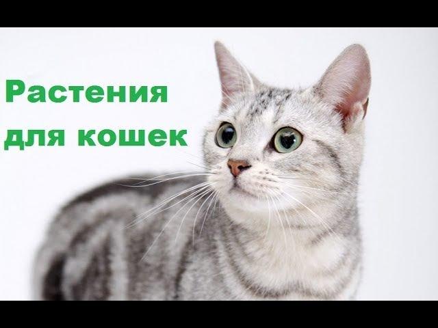 Растения для кошек. Список самых опасных и полезных. Ветеринарная клиника Био-Вет.