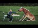 Самые смешные ПРИКОЛЫ С ЛОШАДЬМИ, Смешные лошади Funny horse 4