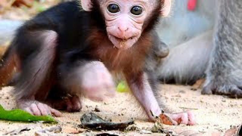Adorable Baby Monkey Newborn Eating, Very Lovely Baby Monkeys