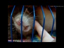 Чем крысы заняты утром? Те еще кадры!