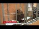 В Днепре в СИЗО нашли повешенной театралку, которая напала с молотком на АТОвца