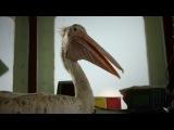 Остров Серега из сериала Остров смотреть бесплатно видео онлайн.