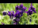 Нежные цветы для души - Лечебная музыка для ВАШЕГО ТЕЛА))