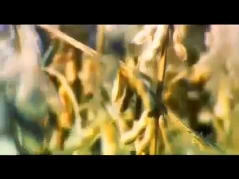 Пища Богов бобы фасоль бобовые № 21 04 06 2013