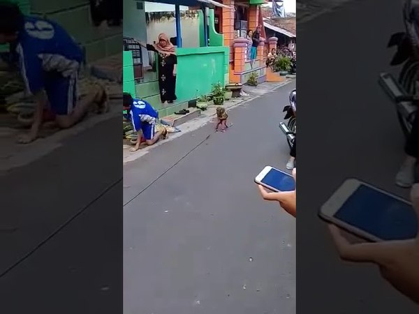 Macaco andando de moto kkkk