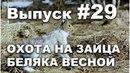 Выпуск 29 Охота весной на зайца беляка онлайн видео 2013 часть 2