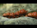 Трейлер. Букашки. Приключение в Долине муравьев (2013) |Оригинал|
