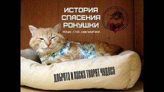 История спасения Ронушки (Приют для котиков г.Снежинск)