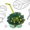 Лимонад-оранжерея / Orangery cafe