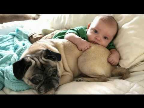 Funny Dogs and Babies |Who needs a babysitter when you have the |Cute dog baby compilation 2018