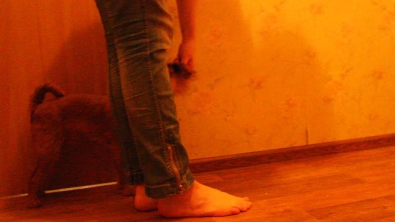 Движение Назад у ноги. Фаня. брюссельский гриффон 8 месяцев.